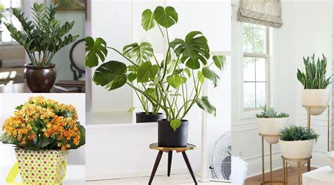 mejores plantas de interior plantas de interior en decoraci 243 n tipos y consejos para casa