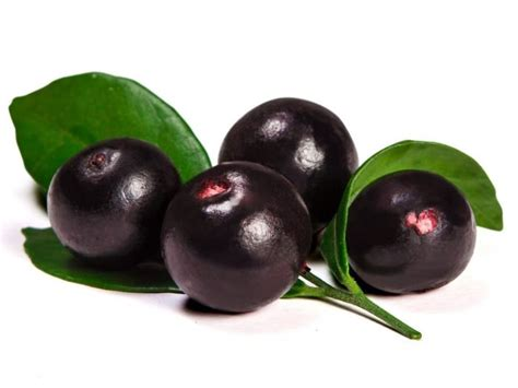 acai berry 7 important benefits of acai berries organic facts