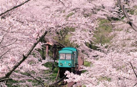 best in japan best places to visit in march where to go in march
