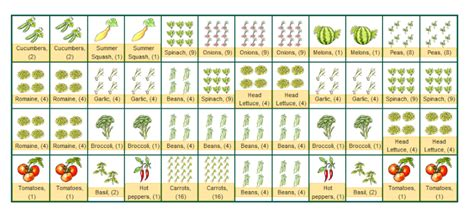 companion gardening layout vegetable companion planting layout quotes