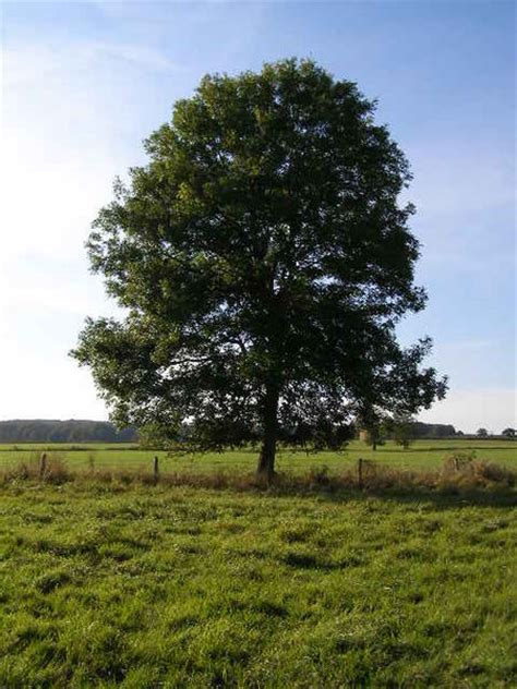 tree pic deciduous and evergreen trees newton s apple org uk