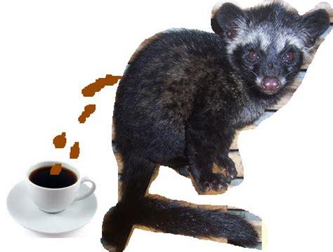 Kopi Luwak ?  Coffee   NumberTwoGuide