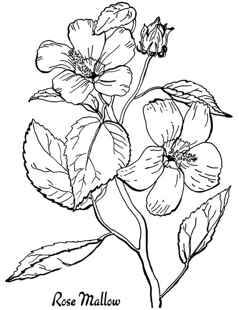 free roses printable coloring page the graphics fairy