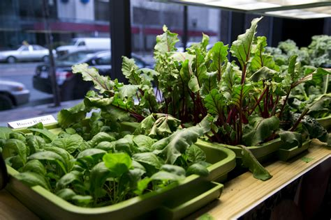 indoor vegetable gardens 12 healthy vegetables and herbs to grow indoors the self