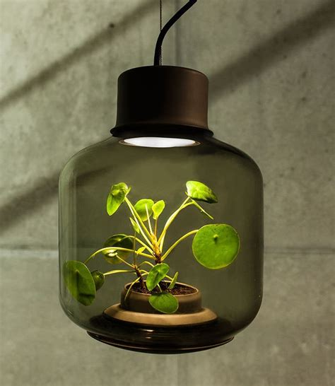 houseplants that don t need sunlight 100 houseplants that don t need sunlight q u0026a