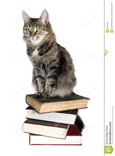 cat picture book brown cat on a books stock photo image of sitting
