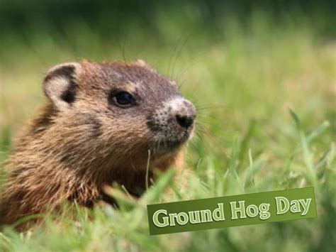 groundhog day hd groundhog day wallpaper wallpaper hd background desktop memes