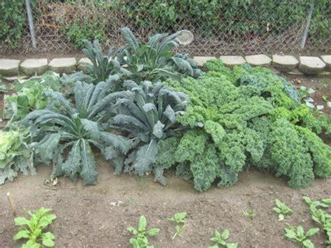 self sufficient vegetable garden 100 self sufficient vegetable garden homestead