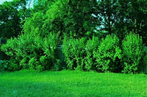 bushes and trees bushes trees and grass by cristela90 on deviantart