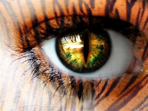 tigers eye sia mckye coffee monday musings tiger s eye