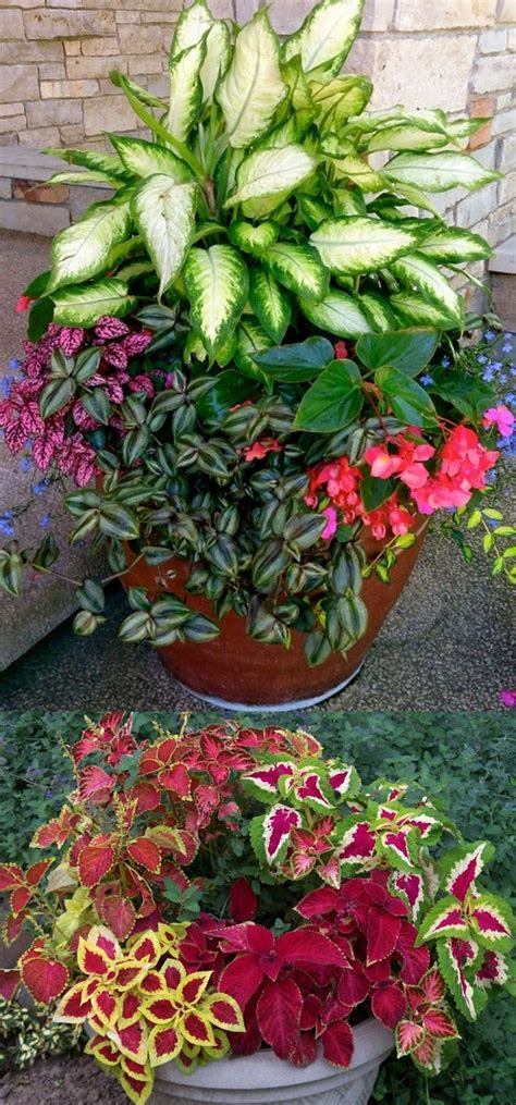flowers shade garden 25 best ideas about shade plants on shade