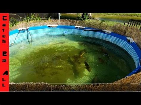 how to build a pool in your backyard how to build a pond using a pool in your backyard catch