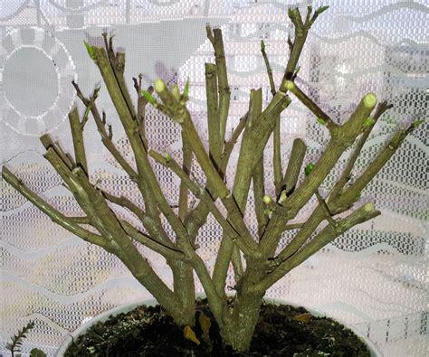 l hivernage des plantes bienvenue sur www potagerdappartement fr