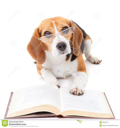 picture books about dogs reading a book clipart clipartsgram
