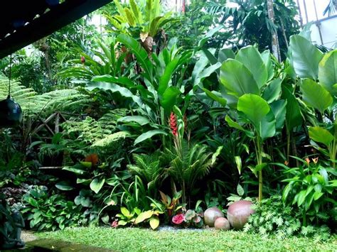 tropical front garden ideas 17 best ideas about tropical landscaping on
