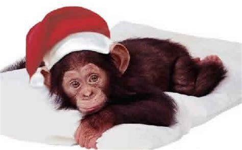 monkey santa santa