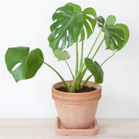 mejores plantas de interior las 17 mejores plantas de interior
