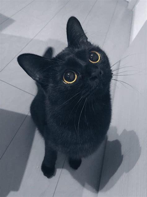 ideas black cat best 25 black cats ideas on black kittens