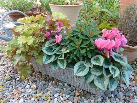 jardini 232 re chic pour l automne avec les mini cyclamens