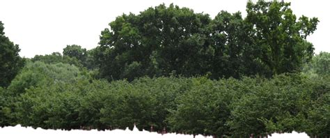 bushes and trees trees bushes png feel free to use my