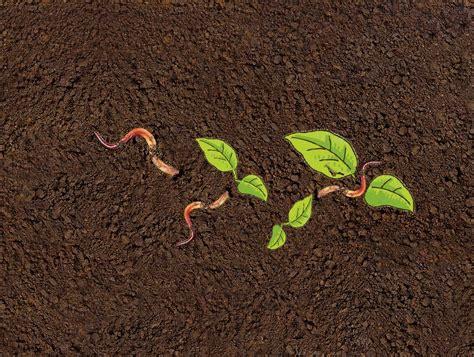 Der Garten Erde by Gartenerde Und Kompost Alnatura