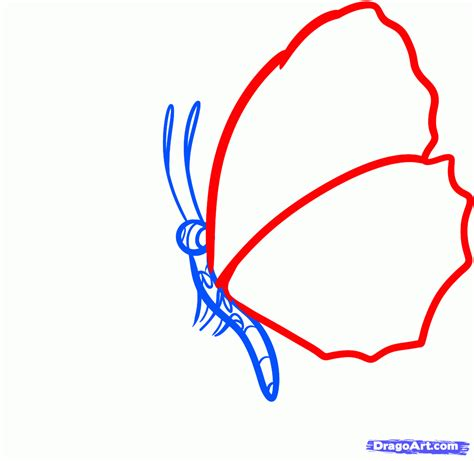 how to draw a how to draw a butterfly on a flower butterfly and flower