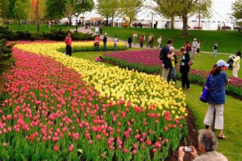 festival canada 10 most fascinating flower festivals in the world
