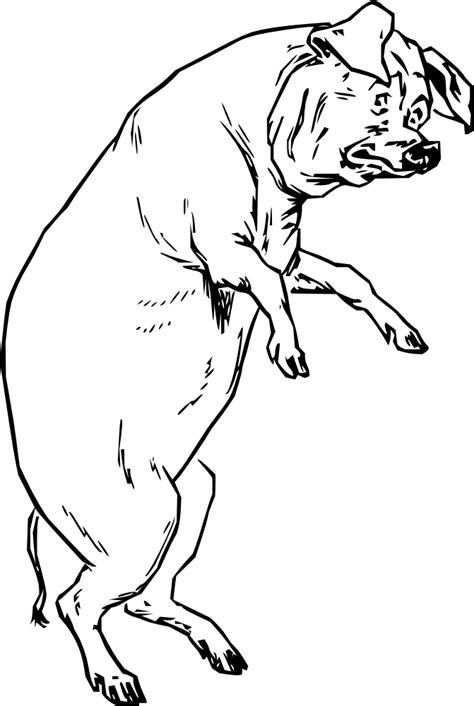 How To Draw A Pig Standing Up outline of a pig cliparts co