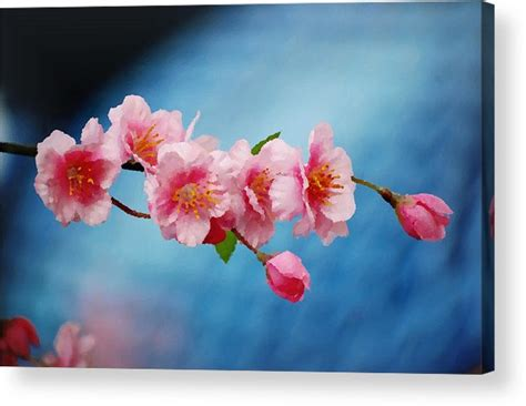 acrylic painting cherry blossom cherry blossom painting acrylic print by gardner