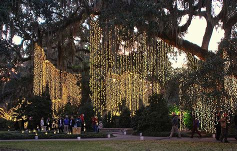 hanging tree lights hanging tree lights 28 images landscape lighting