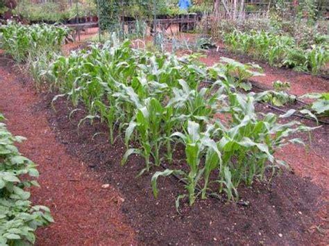 raised rows vegetable garden vegetable garden gardening for and relaxation