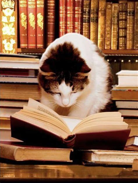 cat picture books cat reading a book