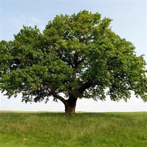 oak tree woodworking home thorpe trees thorpe trees