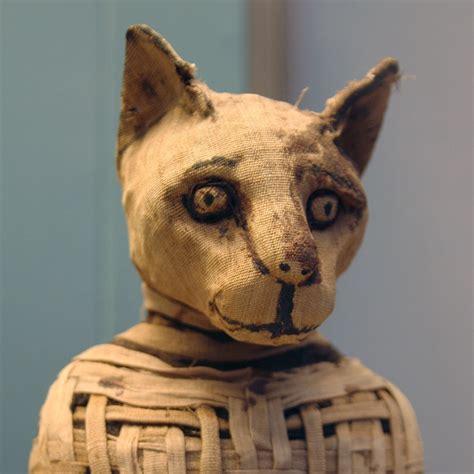 images cats curatorial cats curatorialcats