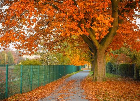 trees best best trees to plant 10 options for the backyard bob vila