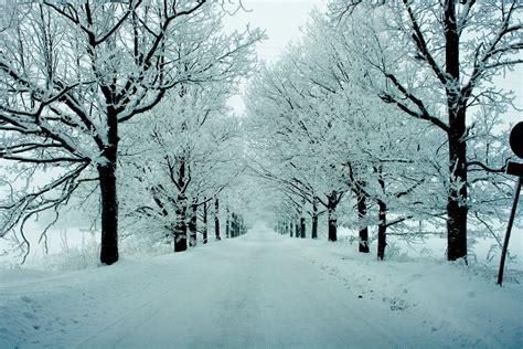 winter trees winter trees by ap69 on deviantart