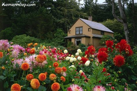 images of beautiful flower gardens beautiful flower gardens photos garden picturess