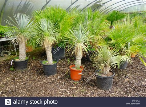 small trees for sale are yucca trees to the denver area house