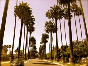 live trees los angeles palm trees meet me in paradise