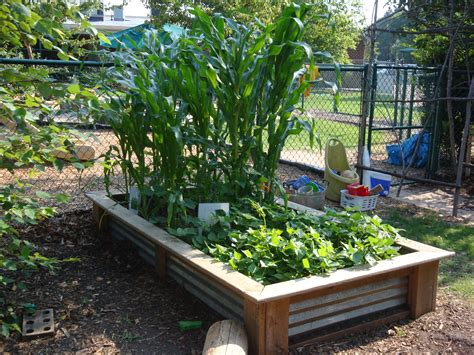 what to plant in raised vegetable garden children s vegetable gardens introduction