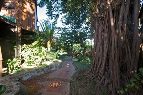 rubber tree st view from bar of pool picture of ladera resort