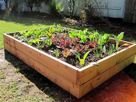 a vegetable garden box how to build a raised vegetable garden box wolverine