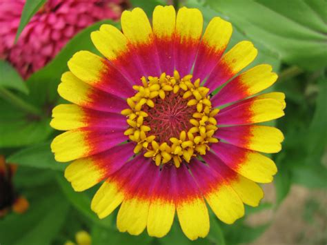 beautiful flowers names and pictures plant and flower names dantea s baby names