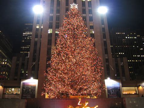 nyc tree in new york city the to do list