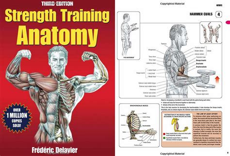 anatomy picture book book review strength anatomy 3rd edition h3