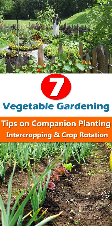 crop rotation home vegetable garden 7 vegetable gardening tips on companion planting