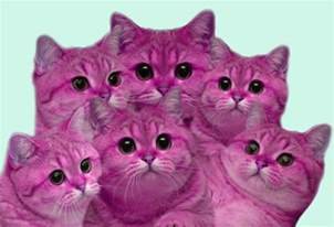Pink Cats On