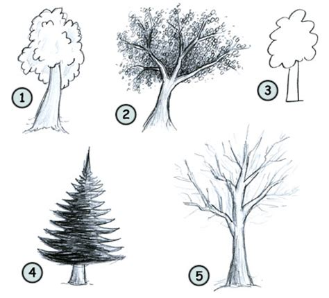 how to draw tree pictures how to draw trees