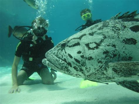 in australia best diving in australia scuba dive reviews by