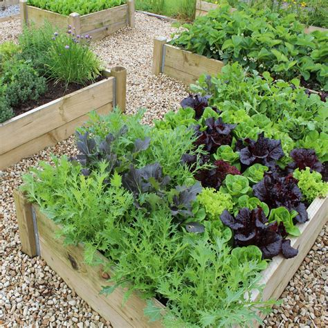 raised bed vegetable garden why use raised bed kits for vegetable gardening how to